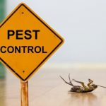 Tips For Effective Pest Control For Your Home