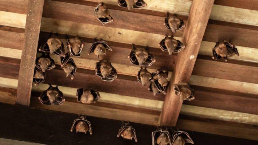 The Most Effective Bat Control Techniques